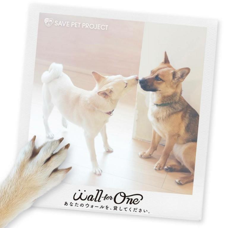 Save Pet Project  保護犬・保護猫の里親プロジェクト  撮影
